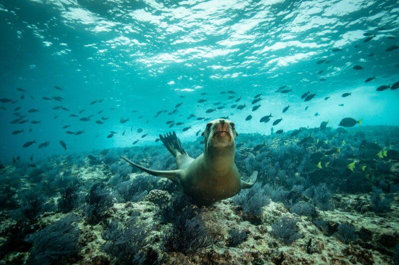 Sea Of Cortez Catamaran & Snorkeling Tour From Los Cabos_54 (2)