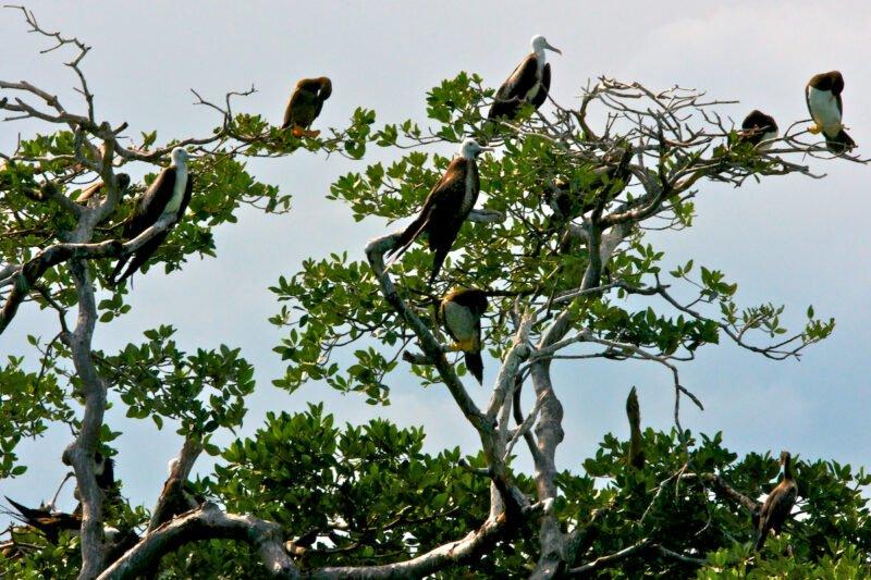 Sian Ka'an Eco Adventure Tour From The Riviera Maya_129 (3)