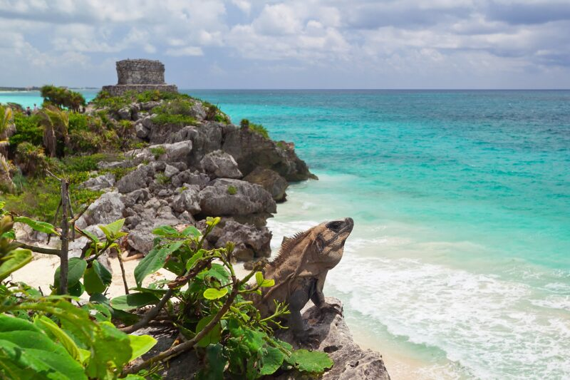 Tulum Culture & Jungle Adventure Tour From The Riviera Maya