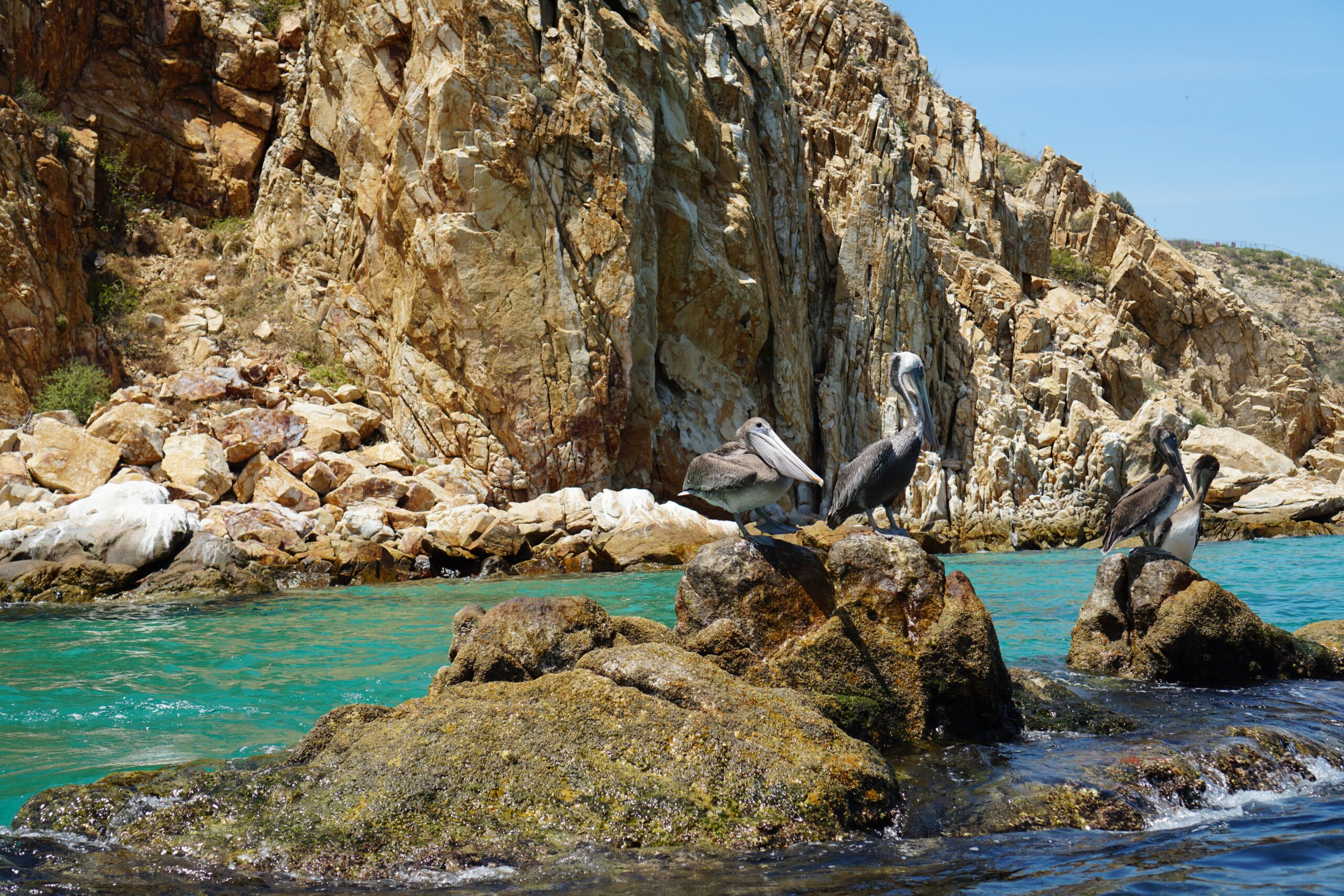 Scenic Los Cabos On Our Lands End Deluxe Sunset Cruise From Los Cabos