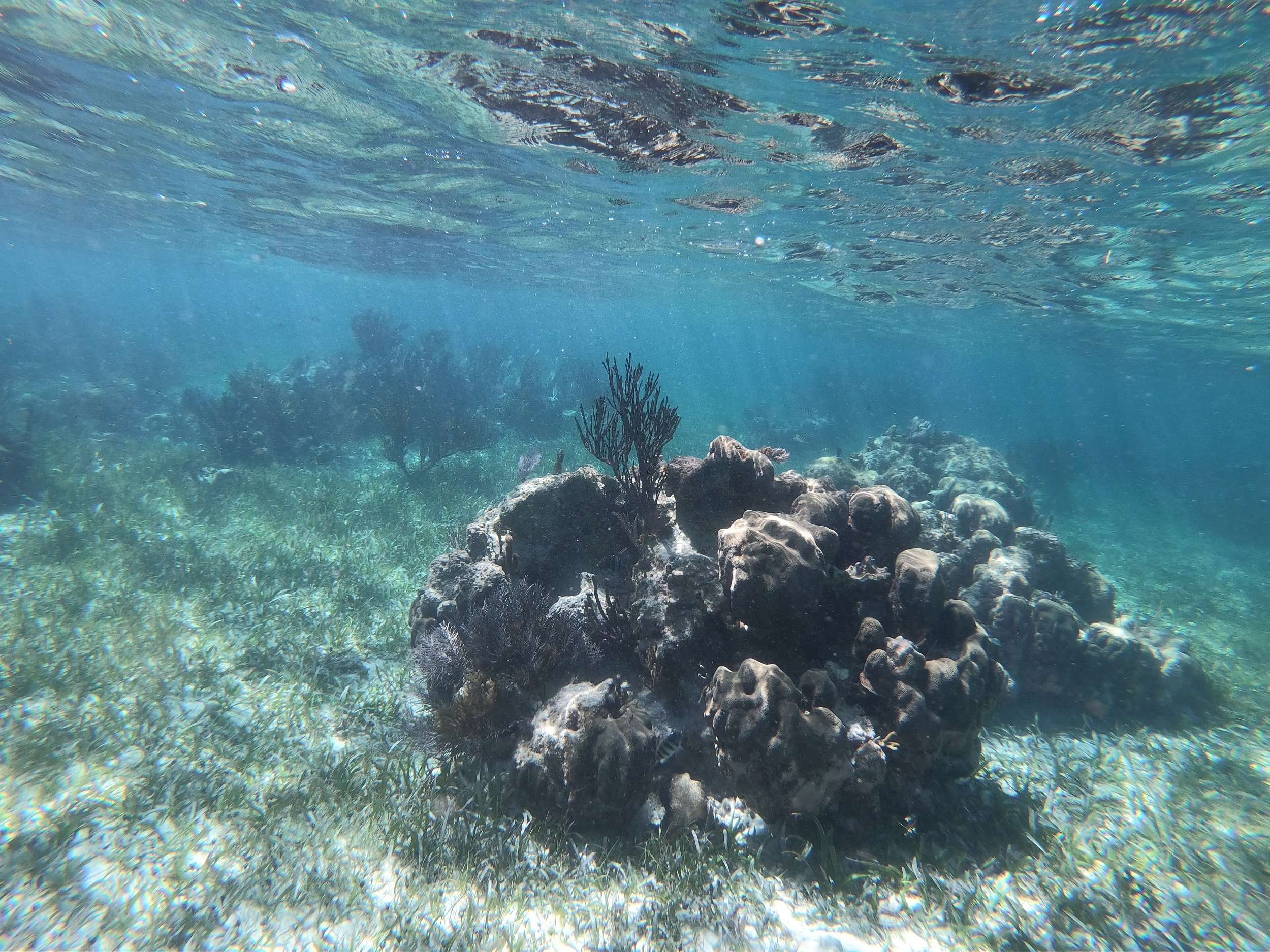 Snorkel Experience At Puerto Morelos Native Park From The Riviera Maya