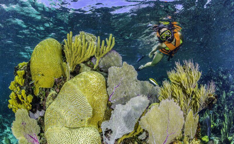 Snorkel Experience At Puerto Morelos Native Park From The Riviera Maya_54 (2)