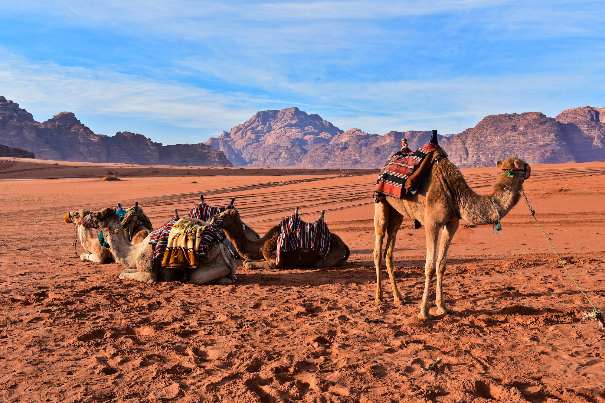 Wadi Rum Bedouin Desert Immersive Food & Cultural Experience
